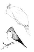 121_birdsss.jpg