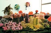 180_hyperbolic-coral-reef.jpg