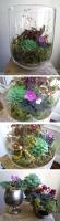 6_terrariums.jpg