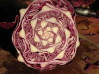 72_cabbage-jpeg.jpg