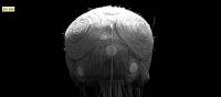80_jim-skullgallery.png