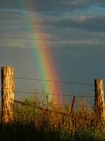 99_rainbowbarbedwire.jpg